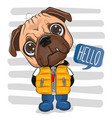 cartoon pug dog in a vest and boots vector image
