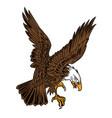 eagle wing fly hawk brown vector image vector image