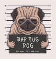 bad pug dog crime vector image vector image