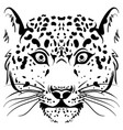 black and white sketch leopard face vector image vector image