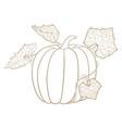 pumpkin outline doodle vector image vector image