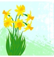 Card with bouqet of narcissus vector image vector image