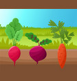 carrot radish and beetroot vector image