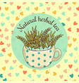 sketch card - natural herbal vector image vector image