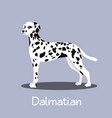 an depicting a cute dalmatian dog cartoon vector image