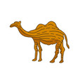 camel animal design vector image