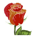 close-up red and orange rose bud isolated vector image
