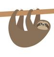 cute sloth hanging on tree branch icon cartoon vector image vector image