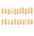 grain cereal icon shape grunge vector image vector image