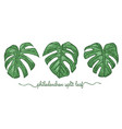 leaves of philodendron elements set botany hand vector image vector image
