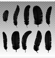 set of various black bird feathers on a vector image vector image