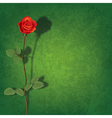 abstract grunge green background with red rose and vector image vector image