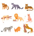 set wild cats on a white vector image
