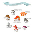 colorful flat design style forest mushroo vector image vector image