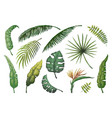 palm leaves jungle hand drawn trees floral vector image
