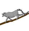 one lemur climbs a tree branch simple style flat vector image