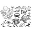 set of animals reptile and amphibian mammal and vector image