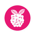 blackberry fresh fruit isolated icon vector image vector image