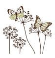 fennel flower butte vector image vector image