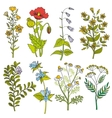Herbs and wild flowers vintage color vector image