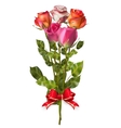 Bouquet of Roses with red bow EPS 10 vector image vector image