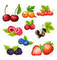 colorful cartoon berries icons collection vector image