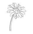 gerbera floral botanical flower black and vector image vector image