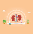 human kidney health with doctor team discuss and vector image