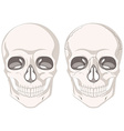 Human skulls on white background vector image vector image
