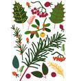 leaves and beriies sprigs sea buckthorn rowan vector image vector image