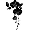 orchids flowers it is isolated vector image vector image