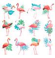 flamingo tropical pink flamingos and exotic vector image vector image