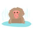 monkey bathe icon cartoon style vector image