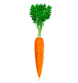 one carrot isolated vector image vector image