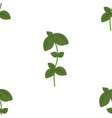 pattern with basil vector image vector image