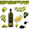 big set with branch olives and with transparent vector image vector image