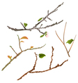 Branch various Sprigs twig tree and bush vector image vector image