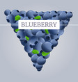 fresh eco blueberry concept background cartoon vector image