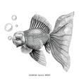 goldfish hand drawing vintage engraving vector image vector image