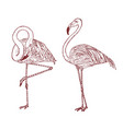 pink flamingo engraved hand drawn birds vector image