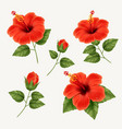 set realistic beautiful hibiscus flower vector image vector image