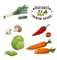 vegetable element of leek mushroom chilli vector image vector image