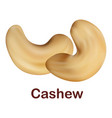 cashew icon realistic style vector image