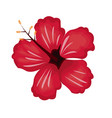 hibiscus flower exotic nature vector image vector image