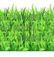 horizontal seamless pattern green grass vector image vector image