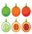 Set of Gac Fruit Health Benefits vector image vector image