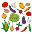 Farm fresh vegetables sketches for farming design vector image vector image