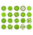 top view tree aerial landscape green planting vector image