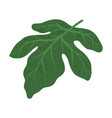 tropical leaf on stem as exotic flora vector image