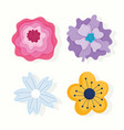 different flowers petals nature decoration vector image vector image